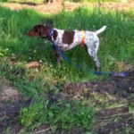 Ruger (Sire)